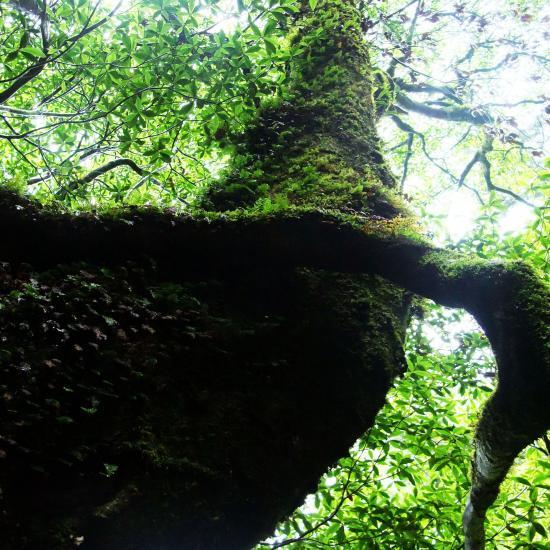 森のシンフォニーイメージ画像