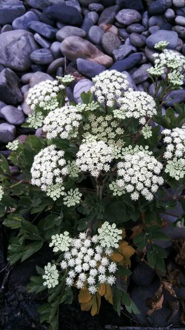 屋久島の花々