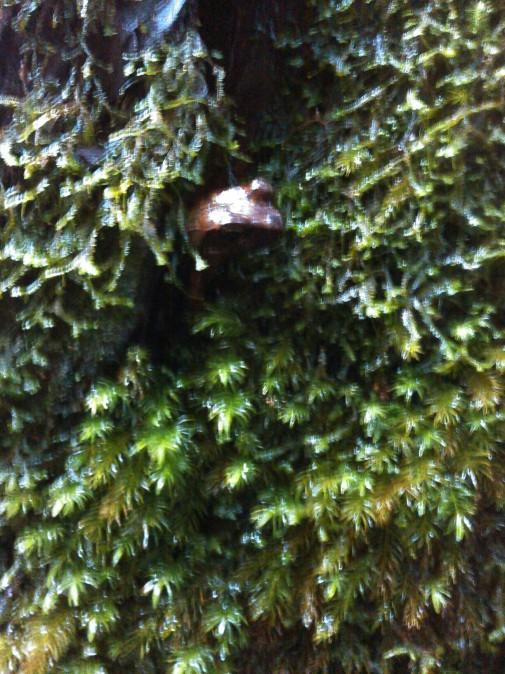 杉の中のカエル