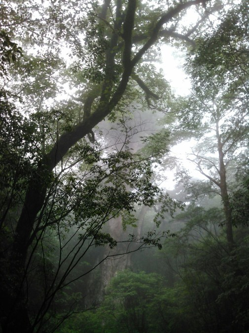 縄文杉引き気味