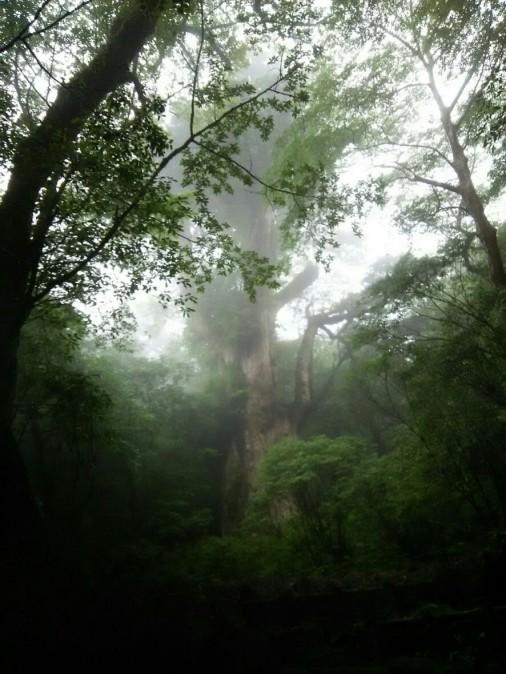 縄文杉正面