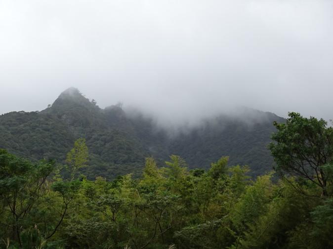 屋久島の秋・サシバとアマクサギの実