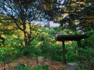 【風景写真】森林に囲まれたプライベートサロンs.p.a.kioku