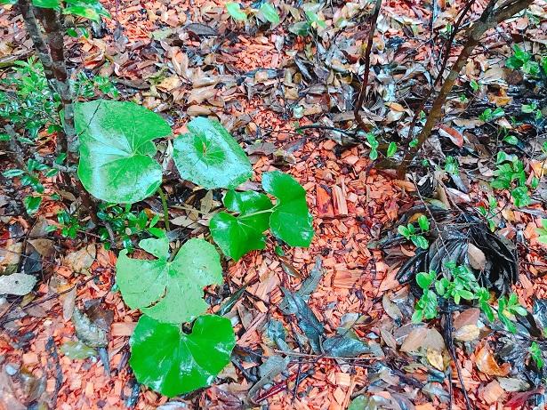 【雨の日の屋久島】森の香りに包まれながら、ゆったり過ごすスパ時間